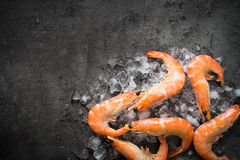 Fresh Prawns Shrimps in ice. Royalty Free Stock Photography