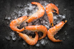 Fresh Prawns Shrimps in ice. Stock Image