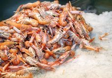 Fresh prawns and shrimps in the ice for sale in fish market Royalty Free Stock Photos