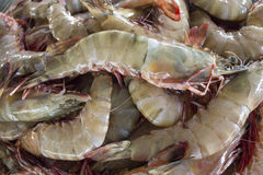 Fresh Prawns (Shrimps) Stock Photos