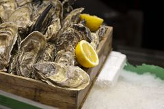 Fresh premium quality oysters with lemon in the wooden box on the ice. Traditional delicatessen seafood. stock photo