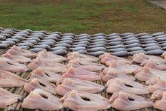 Fresh prepare raw fish Royalty Free Stock Image