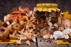 Fresh and preserving  in glass jar mushrooms Stock Image