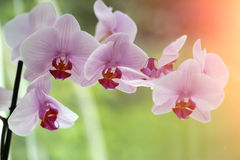 Fresh pretty orchidea Royalty Free Stock Images