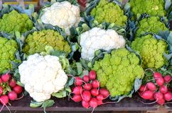 Fresh produce displayed at farmers market. With white and green cauliflowers and bunches of radishes for a healthy diet Stock Photo