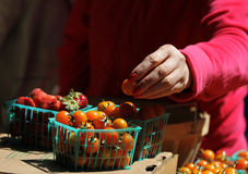 Fresh produce at the. Hand picking fresh cherry tomatoes and strawberries in baskets at the farmers market stock image