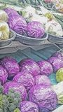 Fresh Produce. Purple cabbage.  Purple cabbage displayed in a produce market for all to see and enjoy. On this day the produce was there for the taking Stock Photos