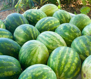 Fresh Produce Watermelon. Fresh watermelon stacked at a produce market Royalty Free Stock Images
