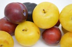 Fresh prunes fruit food. Black white prunes fresh prunes stock photography