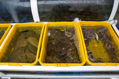 Fresh Psettodes erumei for sale at Fish Market. Fresh Fish for sale at Fish Market-Masan city, Pusan, South Korea Royalty Free Stock Images