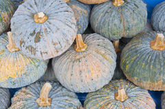 Fresh pumpkin Royalty Free Stock Image
