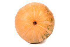 Fresh pumpkin. Bottom view. Stock Photography