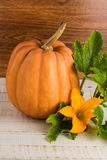 Fresh pumpkin with leaves Royalty Free Stock Photo