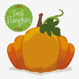 Fresh Pumpkin on Sale, Vector Illustration Royalty Free Stock Photo