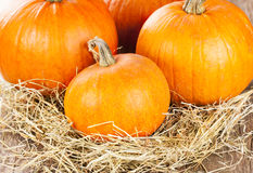 Fresh pumpkins Royalty Free Stock Photos