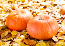 Fresh pumpkins Stock Image