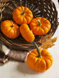 Fresh pumpkins in the basket Stock Photos