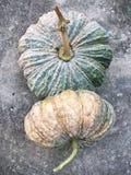 Fresh pumpkins Stock Image