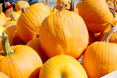 FRESH PUMPKINS Royalty Free Stock Photography