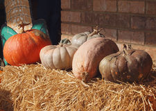 Fresh Pumpkins, Gourds and Dquash Royalty Free Stock Photo