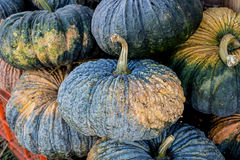 Fresh pumpkins in the market at thailand royalty free stock photography