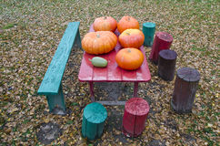 Fresh pumpkins on red garden table in yard Stock Photography