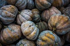 Fresh Pumpkins. A shot of fresh pumpkins taken at a local market in Selangor Stock Image