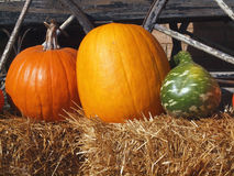 Fresh Pumpkins and Squash Stock Photo