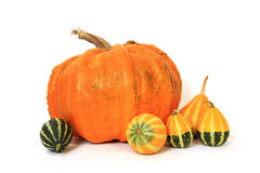 Fresh pumpkins  on white background Stock Image