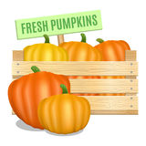 Fresh pumpkins in a wooden box on a white background. Vector Stock Photo