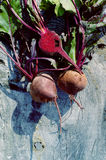 Fresh purple beetroot. On the wooden table. Crop of vegetables Stock Photography