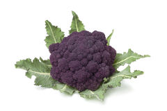 Fresh purple broccoli Stock Image