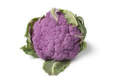 Fresh purple cauliflower Royalty Free Stock Photography