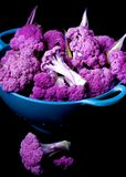 Fresh Purple Cauliflower. Arrangement of Fresh Raw Purple Sprouts of Cauliflower with Leafs in Blue Bowl isolated on Black background Stock Photos