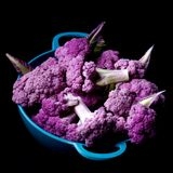 Fresh Purple Cauliflower. Blue Bowl Full of Fresh Raw Purple Sprouts of Cauliflower with Leafs closeup on Black background Royalty Free Stock Photography