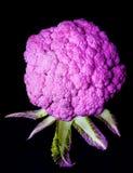 Fresh Purple Cauliflower. Fresh Raw Purple Cauliflower Full Body with Leafs isolated on Black background Royalty Free Stock Photo