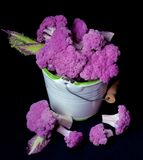 Fresh Purple Cauliflower. Fresh Raw Purple Sprouts of Cauliflower with Leafs in White Bucket isolated on Black background Stock Image