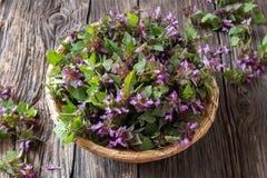 Fresh purple dead-nettle flowers in a basket.  stock photography