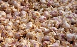 Fresh Purple Garlic Royalty Free Stock Photos