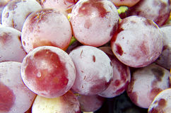 Fresh purple grapes Stock Photos