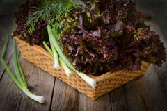 Fresh purple lettuce and chive in basket Stock Photos