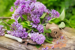 Fresh purple lilac flower bouquet on wood. Outdoors Royalty Free Stock Images
