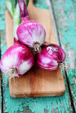 Fresh purple onion, Close-up Stock Photography