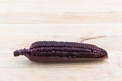Fresh purple organic corn, Maize. Stock Image