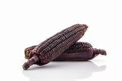 Fresh purple organic corn, Maize . Stock Images