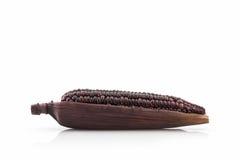 Fresh purple organic corn, Maize. Royalty Free Stock Photos