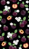 Fresh purple plum seamless pattern with white cherry blossom on black background. Vector illustration stock illustration