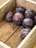 Fresh Purple Plums Stock Photography