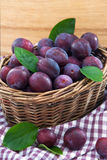 Fresh purple plums in a basket Royalty Free Stock Photography