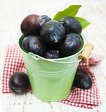 Fresh purple plums Stock Photo
